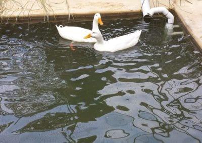 Bird Pond – Currumbin Wildlife Sanctuary