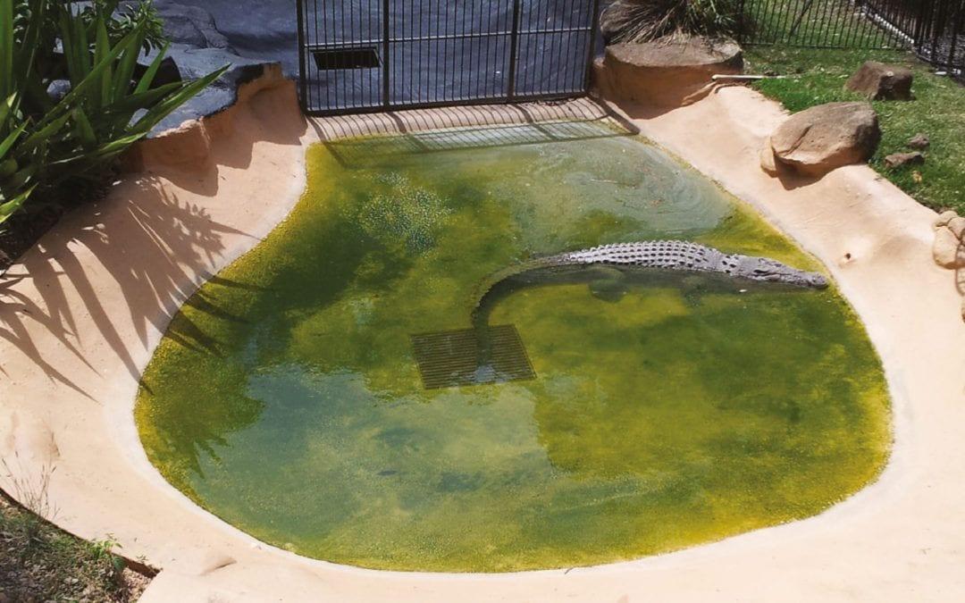 Crocodile Pond – Currumbin Wildlife Sanctuary